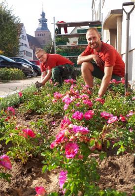 Foto zu Meldung: Rosenpracht in der Malchiner Mühlenstraße