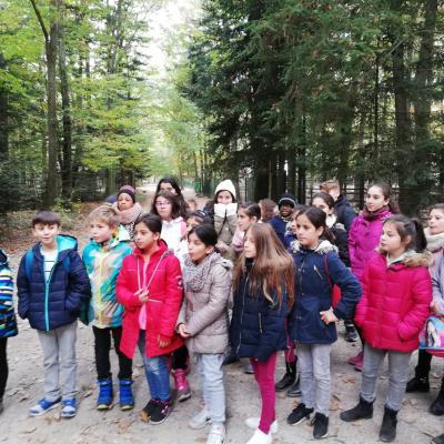 Vorschaubild zur Meldung: Waldtag der vierten Klassen