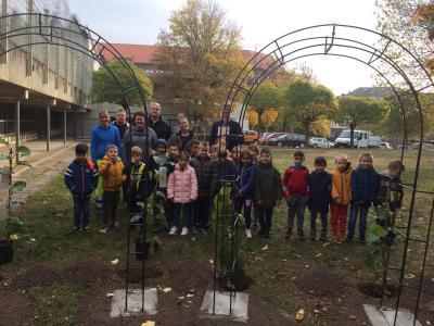 Vorschaubild zur Meldung: Wir pflanzen eine Kiwi-Pflanze