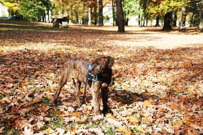 Hund im Herbst- ein paar Tips