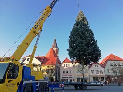 Foto zur Meldung: Weihnachtsbaum ziert den Calauer Marktplatz
