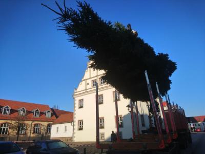 Die Vorbereitungen auf die Adventszeit laufen, hier Weihnachtsbaum 2018