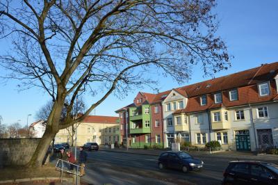 Foto: Der Ahornbaum an der Perleberger Straße soll noch in diesem Jahr gefällt werden I Foto: Martin Ferch