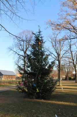 Foto zur Meldung: Oh Tannenbaum, oh Tannenbaum