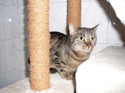 Vorschaubild zur Meldung: Tierbesitzer lässt Katzen allein zurück (@szpirna)