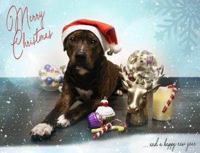 Vorschaubild zur Meldung: Frohe Weihnachten - Veselé Vánoce