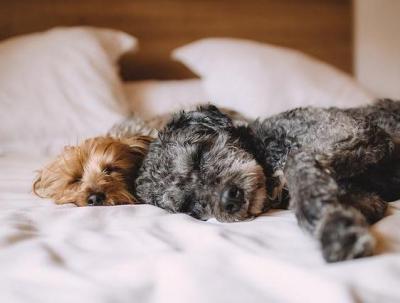 Gehören Hund und Katz mit ins Bett?
