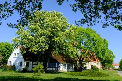 Das Dorfkino Lögow