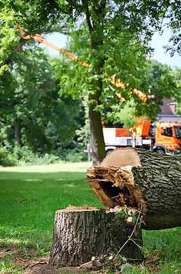 Vorschaubild zur Meldung: Ausbau der Krausestraße erfordert zunächst Baumfällungen