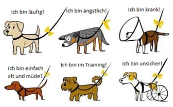 Vorschaubild zur Meldung: Wisst ihr, was die Farbe gelb am Hund aussagt?