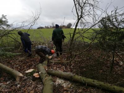 Vorschaubild zur Meldung: Fachgerechte Waldrandpflege