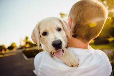 """Vorschaubild zur Meldung: Heute ist """"Liebe-Dein-Haustier-Tag"""""""