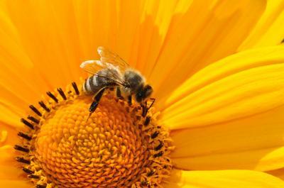 Foto zur Meldung: Von der Biene zum Honig – ein neuer Kurs startet an der Kreisvolkshochschule OSL