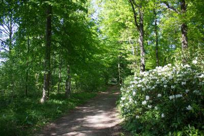 Im Schlosspark Wiesenburg (Foto: Bansen-Wittig)