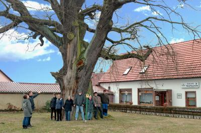 Foto: Mitglieder des Heimatvereins Calau e.V. gruppieren sich um die Calauer Napoleoneiche.