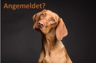 Vorschaubild zur Meldung: An alle Hundehalter: Merkblatt  zur Hundehalterverordnung