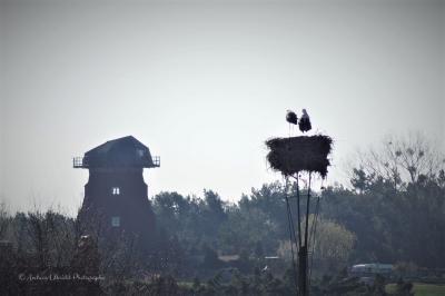 Foto zur Meldung: Storchenpaar 2019