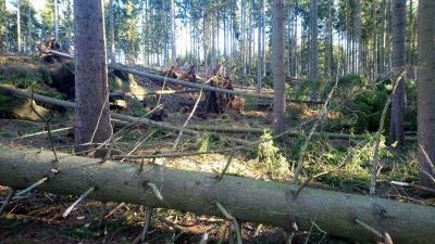 Vorschaubild zur Meldung: Allgemeinverfügung zur Erfassung- und Bekämpfung von holz- und rindenbrütenden Schaderregern (Nadelholzborkenkäfer) im Privat- und Körperschaftswald im Erzgebirgskreis