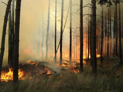 Waldbrand im Jahr 2018