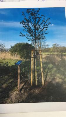 Foto zur Meldung: Pflanzung Baum des Jahres