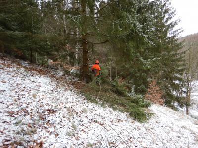 Vorschaubild zur Meldung: Erhalt der seltenen Busch-Nelke