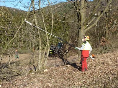 Gehölzpflege in der Landschaft ist aufwändige Handarbeit