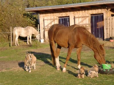 Vorschaubild zur Meldung: neuer Lebens und - Begegnungsraum für Mensch & Tier