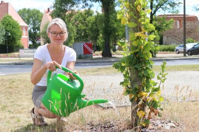 Claudia Braun hatte die Idee zur Calauer Gießpatenschaft und kümmert sich bereits um einen jungen Baum in ihrer Nachbarschaft. Nachahmer sind stets willkommen, geht es doch darum, das städtische Grün zu erhalten. Foto: Stadt Calau / Jan Hornhauer