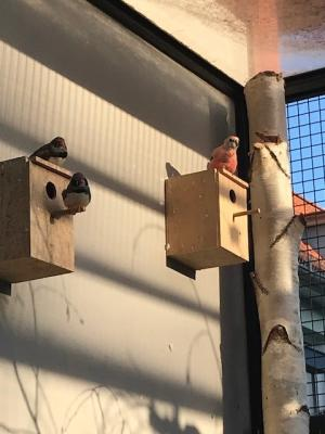Foto zur Meldung: Vogelvoliere in der Röbeler Vorstadt