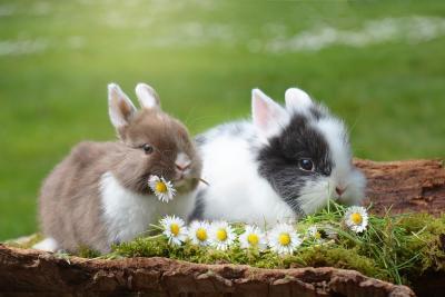 Foto zur Meldung: Förderverein baut neue Kaninchenanlage