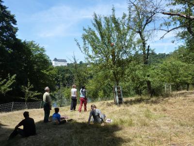 Vorschaubild zur Meldung: Obstbaumschnitt-Event auf der Streuobstwiese Burgk