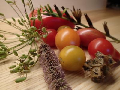 Foto zur Meldung: Saatgut für den Garten – Naturpark lädt am 25. August nach Blunk