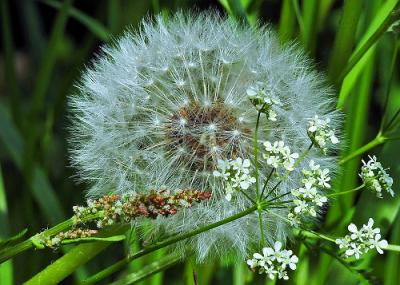 Foto zur Meldung: Die Sprache der Kräuter – am 28. August im Naturpark