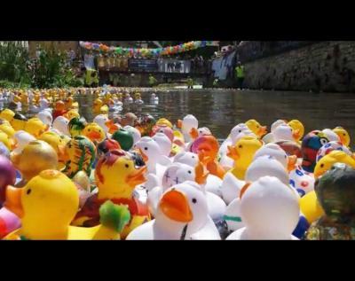 Vorschaubild zur Meldung: Teilnahme am Entenrennen