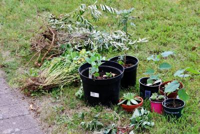 Vorschaubild zur Meldung: Staudentreff für Gartenfreunde bei der Siedlergemeinschaft