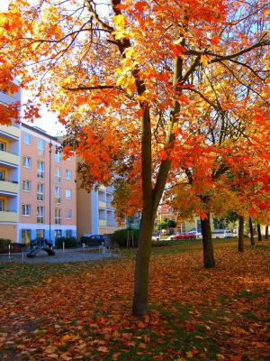 Vorschaubild zur Meldung: Laubentsorgung Herbst 2019 - Laubsäcke für Straßenbäume erhältlich