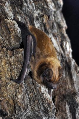 Foto zur Meldung: Ausflug zu den Jägern der Nacht im Naturpark