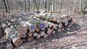 Brennholzbedarf für das Jahr 2020