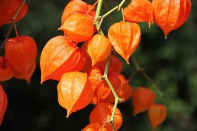 Foto zur Meldung: Laubentsorgung...der Herbst kommt in großen Schritten
