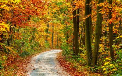 Vorschaubild zur Meldung: Herbstferien