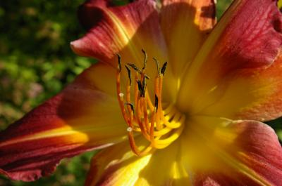 Vorschaubild zur Meldung: Rosenkränzchen: Künftig in der Vegetationszeit monatlich ein Treffen in einem privaten Garten