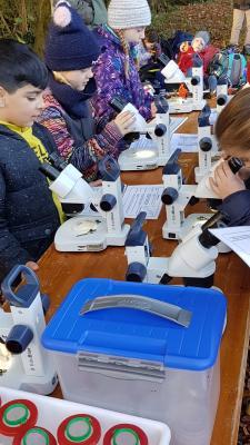 Lebewesen unter dem Mikroskop betrachten