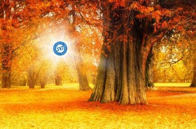 Bild der Meldung: Ein goldener Herbst für den SVI?