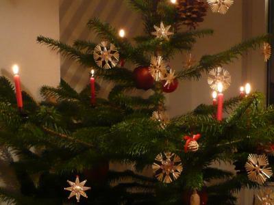 Vorschaubild zur Meldung: 12.12.20: Weihnachtsbaumverkauf in der Försterei