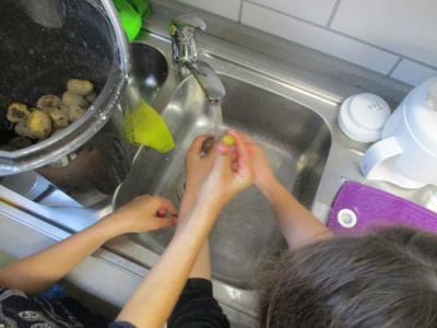 Aufgabenteilung: Einige Kinder ernteten die Kartoffeln, einige wuschen sie ab, einige schnitten sie klein, einige kochten sie - alle aßen sie.