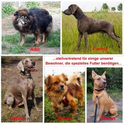 Spendenaufruf Hunde