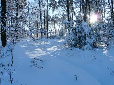 Vorschaubild zur Meldung: Kein Trainingsbetrieb während den Winterferien!