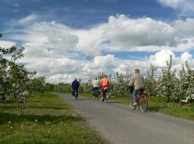 Radfahrer v. blühenden Bäumen©Tourismusverband Landkreis Stade-  Elbe e.V.