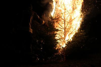 Foto zur Meldung: Das war's dann, Weihnachten – die Tannenbäume sind verbrannt