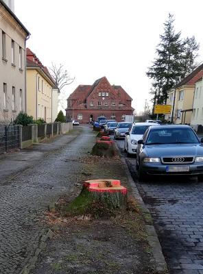 Foto zur Meldung: Baumfällungen in der Bahnhofstraße